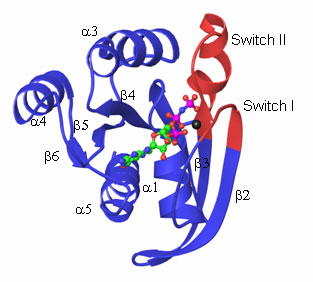 GTPase 1